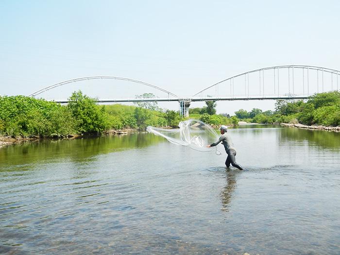 広瀬川における投網でのアユの採捕風景(伊藤さん提供)