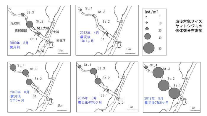 ヤマトシジミの分布図。2009年には生息していなかった上流部のポイント(St.4)にも、震災後に生息するようになったことがわかる。他の地域からの移植放流も行った結果、生息数は震災前を大きく超える(伊藤さん提供)