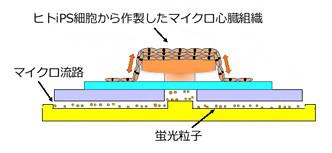 開発した「ハートオンチップ型マイクロデバイス」の模式図(理化学研究所提供)