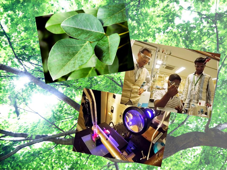 自然に学び、未来を築け 人工光合成への挑戦 ≪特集 令和2年版科学技術白書≫