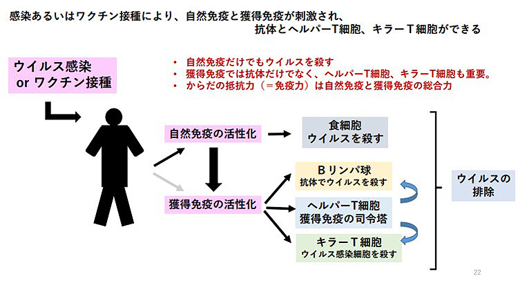 ウイルス感染やワクチン接種に対する免疫反応の仕組み(宮坂昌之氏提供)