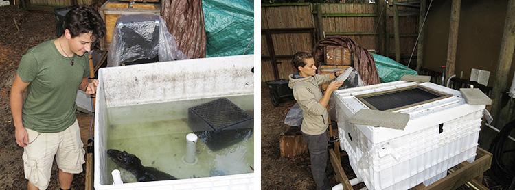 今回の研究対象は、120センチメートルほどのヨウスコウワニ。水槽にワニを入れ、ブロックで水槽のふたのシリコンを密閉して、ガスが漏れないようにした。※画像提供:ジューディス ヤニッシュ、ステファン レーバー