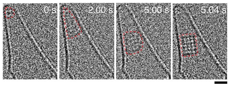 円錐状のカーボンナノチューブ内で塩化ナトリウムが集まり結晶が形成される過程(赤破線内)を電子顕微鏡で捉えた動画から。数字は撮影開始からの経過時間(秒)。この時は5.04秒でイオン4個×6個の結晶が確認できた。右下の目盛りは1ナノメートル(東京大学提供)