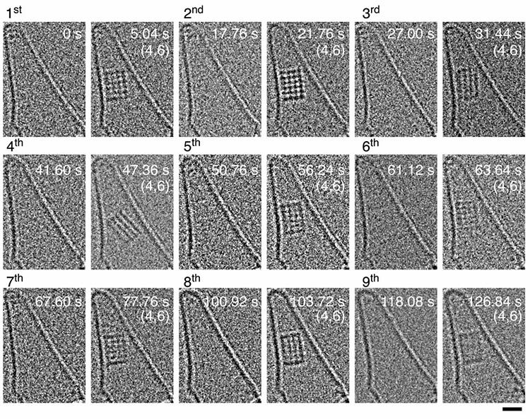 塩化ナトリウムの結晶核形成が9回撮影された。所要時間にはばらつきがあった。各画像内の数字は撮影開始からの経過時間(秒)、カッコ内は結晶核を構成するイオンの見かけ上の個数。右下の目盛りは1ナノメートル(東京大学提供)