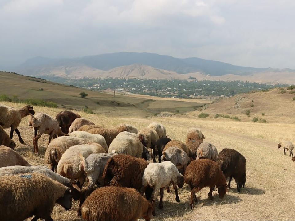 牧畜の世界への普及、最初期から多彩だった 同位体分析で解明