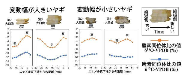 分析結果から。個体により季節変動に差がみられた(名古屋大学提供)