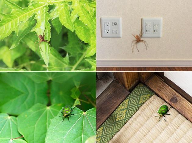 調査で回答者に示した虫の画像の例(東京大学提供)