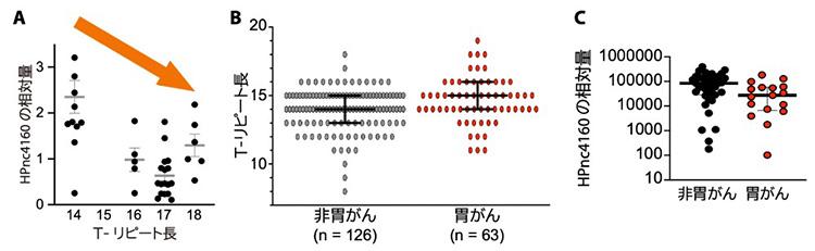 実験結果。(A)スナネズミの胃から取り出したピロリ菌ではTリピートが長くなり、HPnc4160が減っていた。(B)胃がん患者のピロリ菌は、胃がんでない人のものよりTリピートが長かった。(C)胃がん患者ではHPnc4160が少なかった(大阪大学微生物病研究所提供)