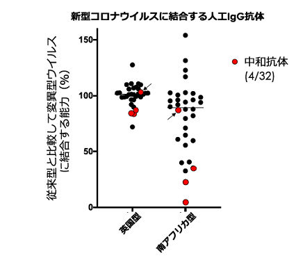 人工的に作り出した中和抗体(人工IgG抗体)が新型コロナウイルス変異株に結合する能力(広島大学提供)