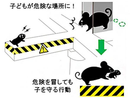 危険冒しても子を助ける脳の仕組みが分かった 理研がマウス実験で解明