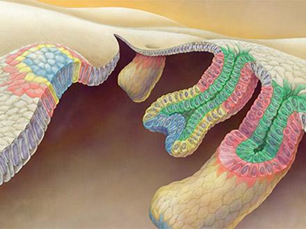 体毛を生やす「毛包幹細胞」の起源を解明 理研グループ