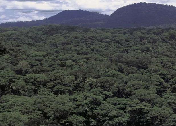 熱帯林は生物多様性の宝庫(横塚眞己人氏撮影/中村桂子氏提供)