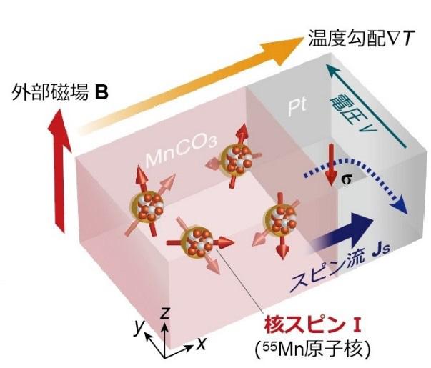 核スピンによって電気(電圧)が起こった実験の概念図(東京大学提供)