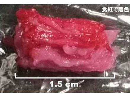 3Dプリンターで「霜降り培養肉」を作製 阪大、凸版印刷など