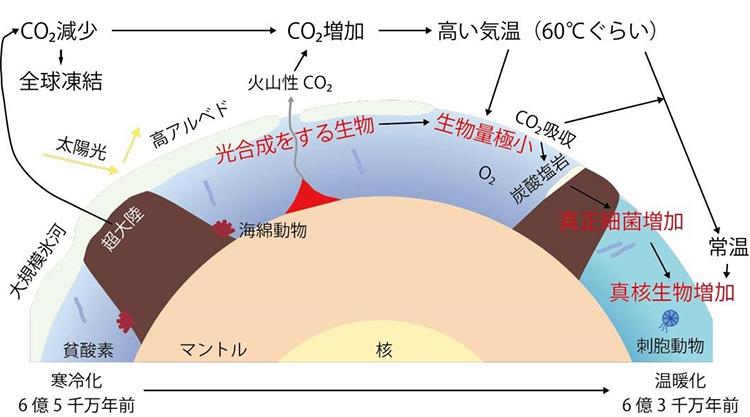 全球凍結の時代とその後に起きた生物変化(海保邦夫・東北大学名誉教授提供)