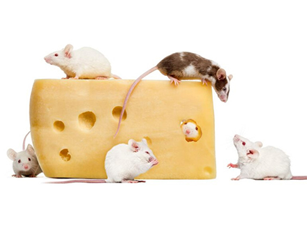 肥満もたらす食欲を制御するタンパク質発見 沖縄科技大、マウスの実験で