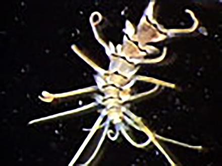 ミクロの小宇宙〜Microcosmic Explorers〜 (3)海の底の生きものたち