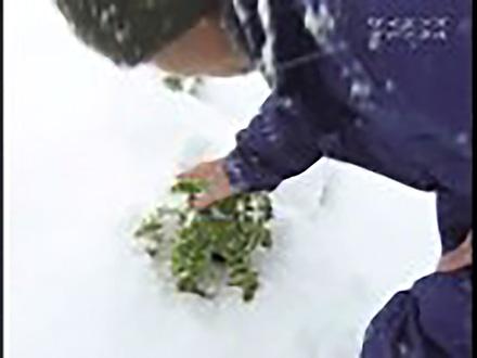 いきもの歳時記 (1)特集・虫たちの冬ごもり