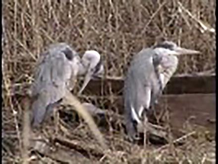 いきもの歳時記 (2)特集・よみがえる野鳥の楽園