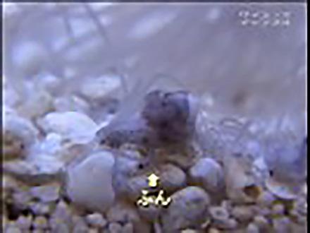 ミクロの小宇宙〜Microcosmic Explorers〜 (17)クラゲを見てみよう