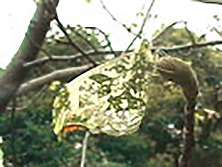 いきもの歳時記 (33)特集〜春を呼ぶ花とチョウ
