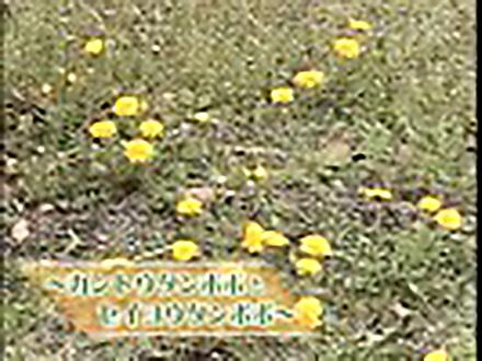 いきもの歳時記 総集編  (1)四季の植物