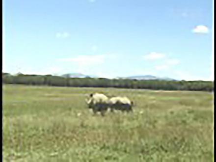 アニマル・サイエンス (6)サイをこの地にもどしたい 〜ケニア ライノ モニタリングプログラム〜