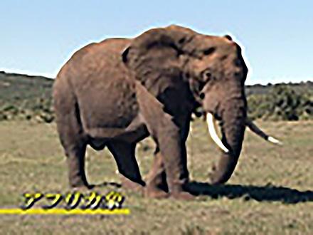 アニマル・サイエンス (8)象の楽園をつくる 〜南ア・アドエレファント国立公園〜