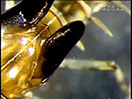 ミクロの小宇宙〜Microcosmic Explorers〜 (20)川に棲む小さな生きものたち