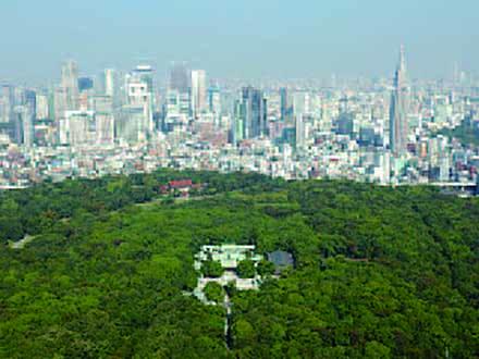 科学の遺産と未来 (7)自然との共生【後編】100年の森づくり 東京・明治神宮