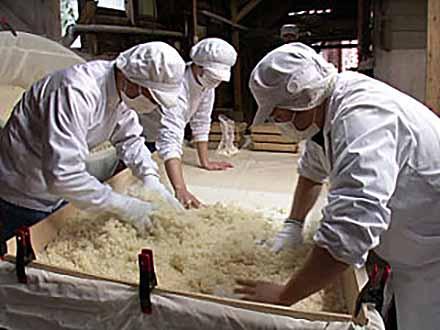 おいしさの扉 (4)食材加工の科学【中編】発酵の科学