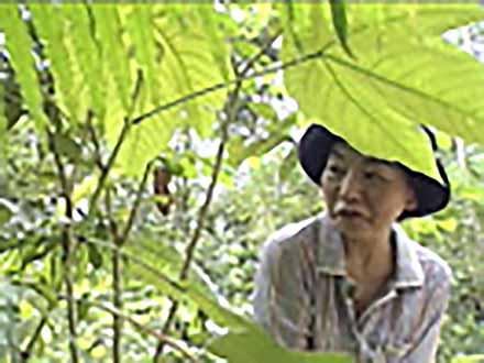 中村桂子の生物進化40億年の旅  (1)中村桂子の生物進化40億年の旅