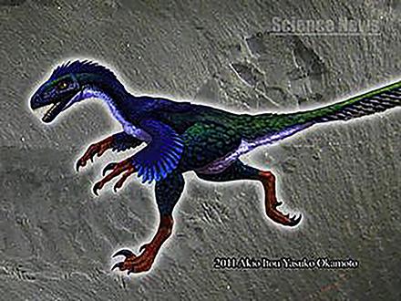 サイエンスニュース2011(新着情報) (15)鳥の祖先はやはり恐竜だった!〜指論争に終止符を打つ発生研究〜