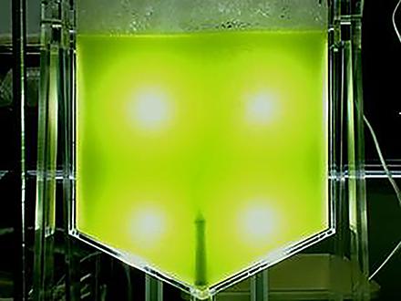 サイエンスニュース2011(新着情報) (25)「藻」からバイオ燃料 加速する研究開発
