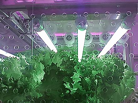 サイエンスニュース2011(新着情報) (29)植物工場の新展開