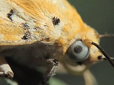 サイエンスニュース2011(新着情報) (30)生物に学ぶものづくり バイオミメティクスの挑戦