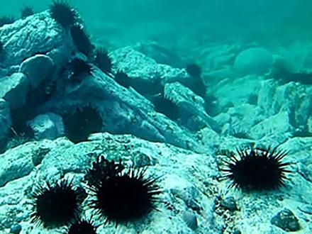 サイエンスニュース2014 再び豊かな海を 東北復興にかける海洋科学(2014年11月17日配信)