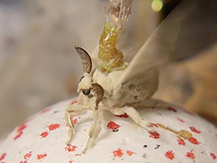 サイエンスニュース2015 昆虫サイボーグ 新技術!生物と機械の融合(2015年9月30日配信)