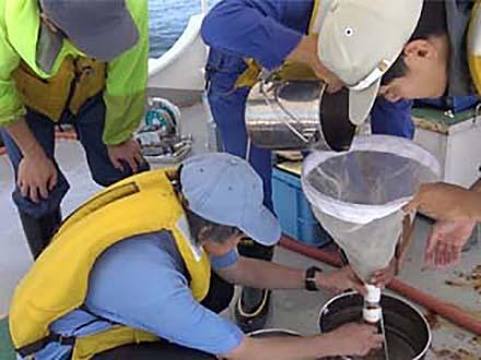 サイエンスニュース2016 海洋プラスチック汚染 心配な生物への影響(2016年10月5日配信)