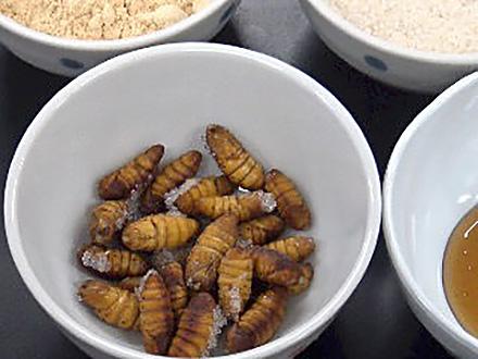サイエンスニュース2017 見直される昆虫食 食糧問題から宇宙開発まで(2017年4月26日配信)