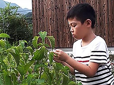 全国こども科学映像祭受賞作品 (86) H27年度第14回佳作小学生部門『葉っぱは緑色』
