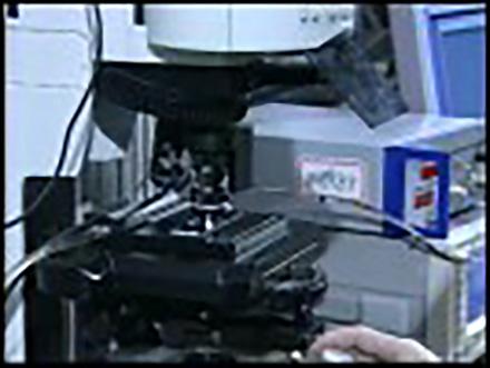 科学のフロンティア (4)生きた細胞の現象を見る 細胞内輸送システムの解明