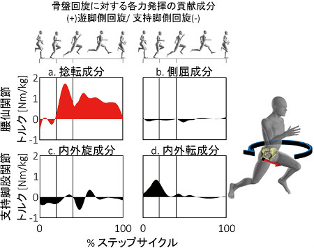 スプリントのデータ解析 短距離選手のデータ収集・解析によって、股関節や腰部、下肢が走りにどのように作用するかが明らかになった 画像提供:東京大学スポーツバイオメカニクス研究室