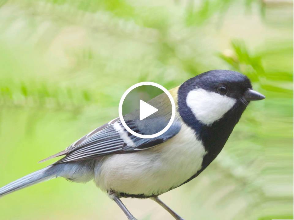 動物の鳴き声は私たちの「言葉」に比べ、どのくらいの複雑さや多様さを持っているのでしょうか。街なか